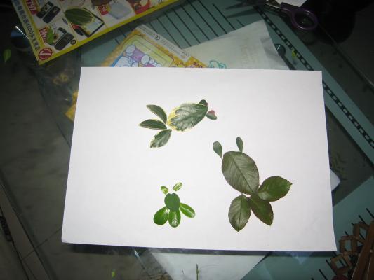 树叶贴画之金鱼篇