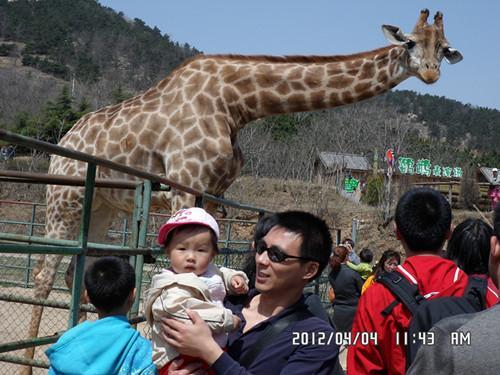 自驾胶南野生动物园