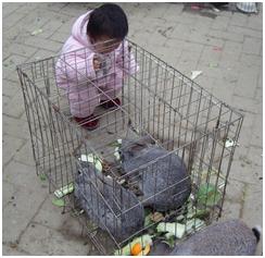 动物 最近/喂小白兔,优太喜欢动物了。