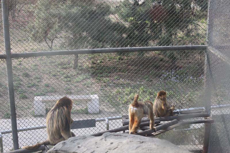 动物园里的欢乐,曰记300字